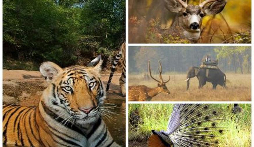 Tiger Trails with Taj Safari