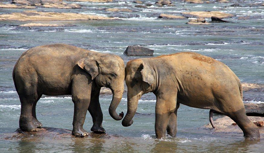 8 day Discover Sri Lanka