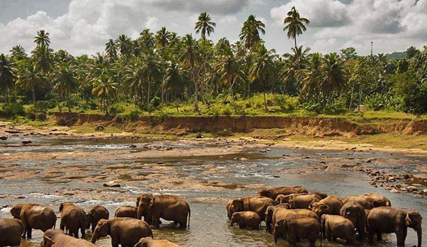 4 day Highlights of Sri Lanka