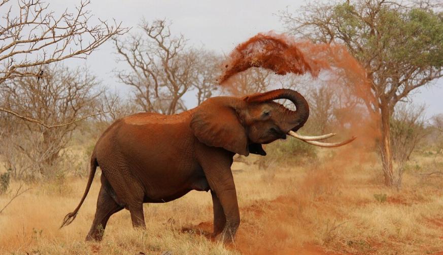 Main Kenya Safari