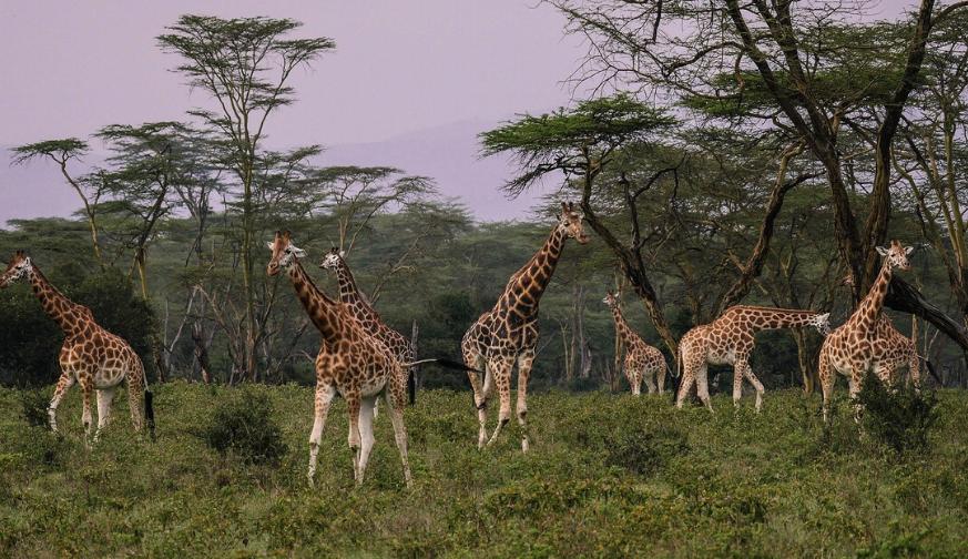 Kenya At A Glance Safari