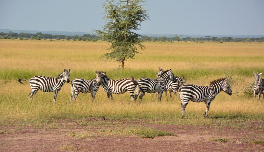 Manyara Serengeti Ngorongoro 5 Nights 6 days Tour