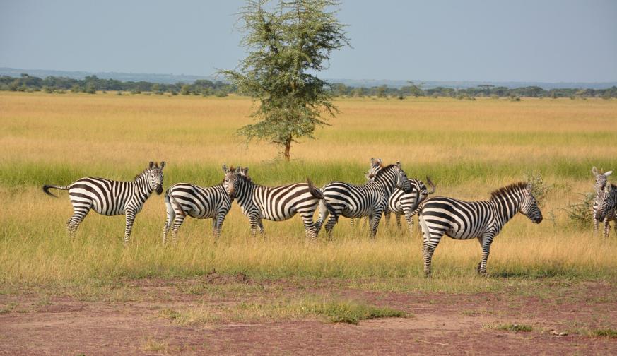 Manyara Serengeti Ngorongoro 5 Nights 6 days Tour