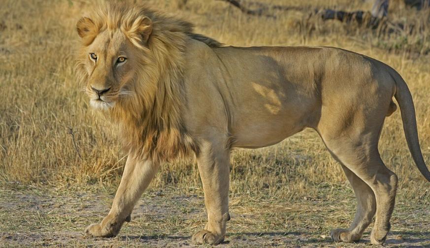 Kruger Park Uncovered 2020 3 Days 2 Nights Tour